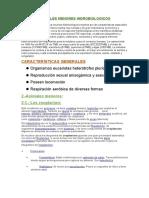 Animales Menores Hidrobiologicos (2)