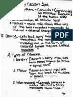 nervous system notes 1