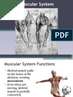 muscular system edit