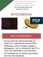 SEM8-MITOCONDRIAS