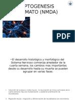 Sinaptogenesis