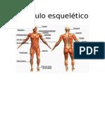 Anatomia Musculo esquelético