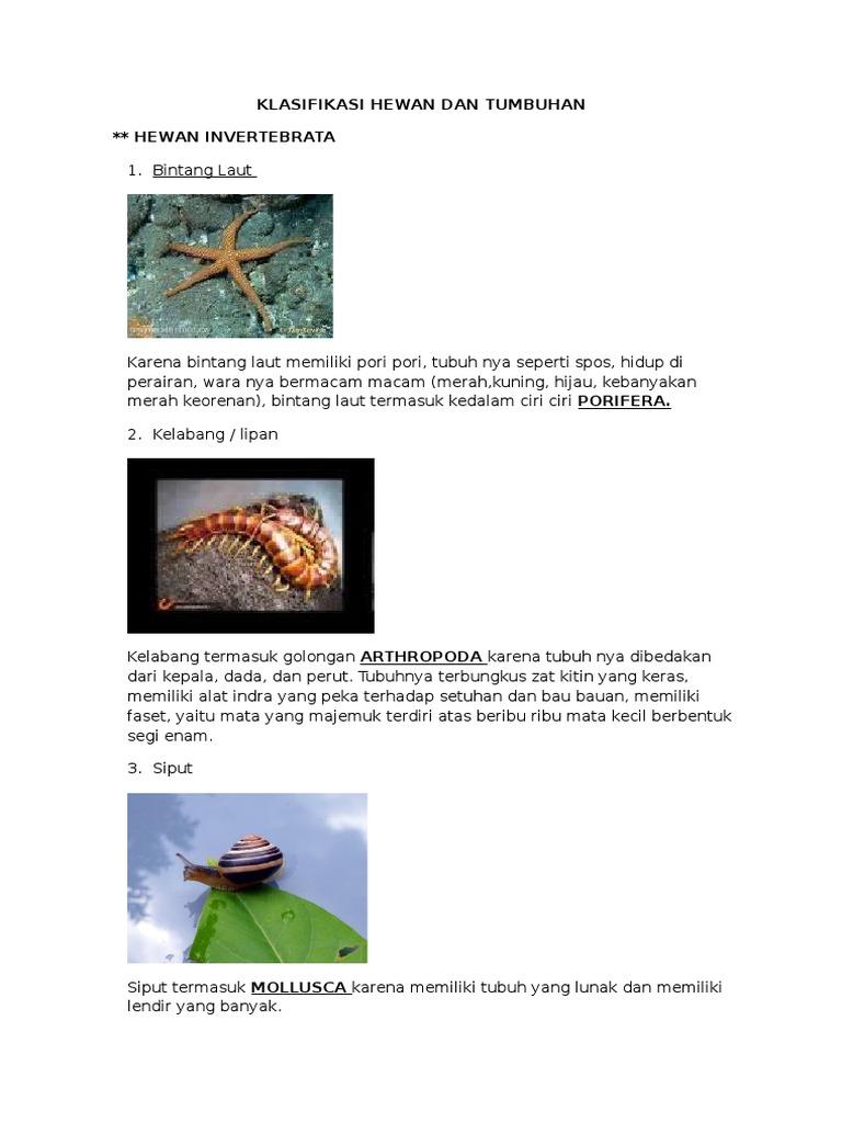 105+ Gambar Klasifikasi Hewan Dan Tumbuhan HD Terbaik
