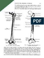 Tratado de Anatomia Humana Quiroz Tomo I_181