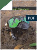 Introduccion Alos Escarabajos Coprofagos
