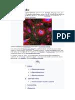 Biología Celular