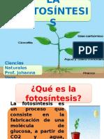 Presentación1 FOTOSINTESIS