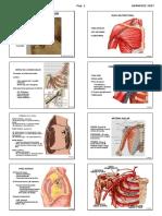 1 Anatomia Locomotor m Superior Usa 2017 Alu.pdf
