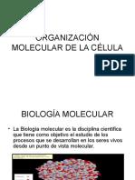Organización Molecular de La Célula