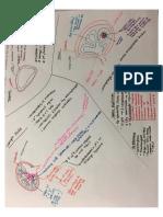 Spleen vs. Lymph Node vs. Thymus