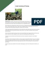 Illegal Logging Picu Banjir Bandang Di Padang