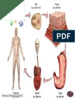 2b_levels_of_structural_organization.pdf