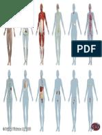 3b Body Systems