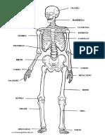 ESQUELETO HUMANO CON NOMBRES.pdf