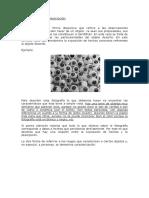 45191_179813_Guía de Caracterización y Descripción