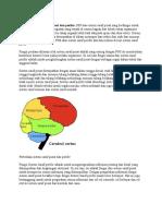 Perbedaan Sistem Saraf Pusat Dan Perifer