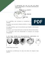 Prova Embriologia 1 Ano