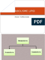 Metabolisme Lipid Pada Tumbuhan