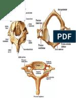 Cervical 2