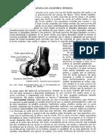 Tratado de Anatomia Humana Quiroz Tomo I_184