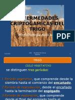 Enfermedades Criptogamicas Del Trigo-0043-0012