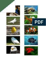 animales acuaticos.docx