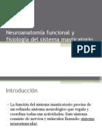 Neuroanatoma Funcional y Fisiologa Del Sistema Masticatorio