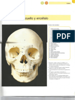 Huesos Del Craneo - Atlas Mcminn de Anatomía Humana