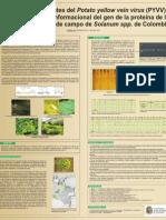 Detección de variantes del Potato yellow vein virus (PYVV) por polimorfismo conformacional del gen de la proteína de la cápside en aislados de campo de Solanum spp. de Colombia