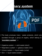 15. the Urinary System