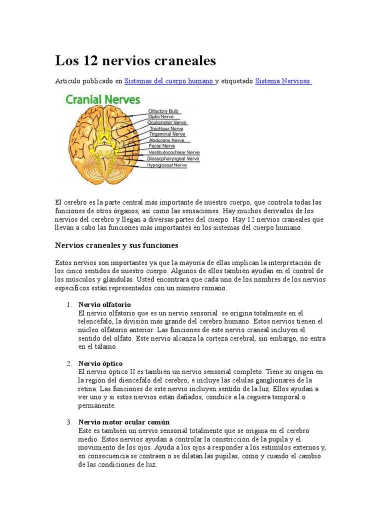 Los 12 nervios craneales.docx