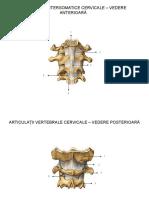 Anatomia Omului - Articulatiile - Prezentare Interactiva