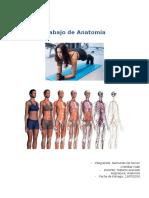 Trabajo de Anatomía