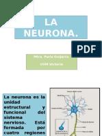 4 La neurona.pptx