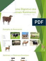 Sistema Digestivo Dos Animais Ruminantes