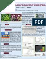 Detección del Potato yellow vein virus (PYVV) en brotes de tubérculos de plantas de Solanum tuberosum grupo phureja de Colombia por PCR en tiempo real (qPCR)