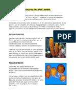 PHYLUM DEL REINO ANIMAL.docx