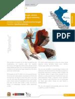 Shansho_ficha.pdf
