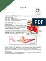 fono.audicion.pdf