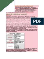 4. ANATOMIA Y FISIOLOGIA DEL SISTEMA MUSCULAR.docx