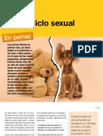 AV_26_Ciclo Sexual
