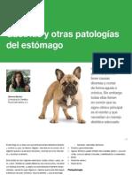 AV_26_Gastritis y otras patologías del estómago