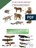 evolucion de las especies.ppt
