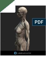 Anatomia - Referência Para Artistas