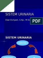 Anfis Sistem Urinaria