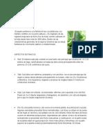 PLANTAS CARACTERISTICVAS