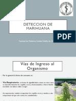 PPT_Deteccion de Marihuana