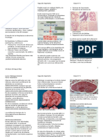 Clase 3 Patología Neoplasias