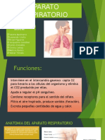 Sistema Respiratorio - Morfo