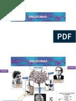 Filogenomas a traves de los Ribosomas